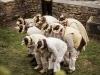 dans_l_oeil_du_mouton_-_cie_les_jolies_choses_-_luz_st_sauveur_-_pixbynot_36_