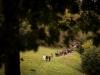 dans_l_oeil_du_mouton_-_cie_les_jolies_choses_-_luz_st_sauveur_-_pixbynot_67_