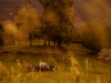 dans_l_oeil_du_mouton_-_cie_les_jolies_choses_-_luz_st_sauveur_-_pixbynot_83_